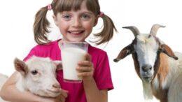 goat milk